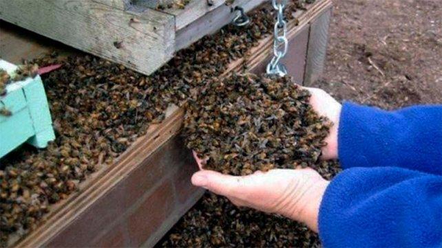 Los agrotóxicos acaban con 70.000 abejas de una colmena de manera fulminante